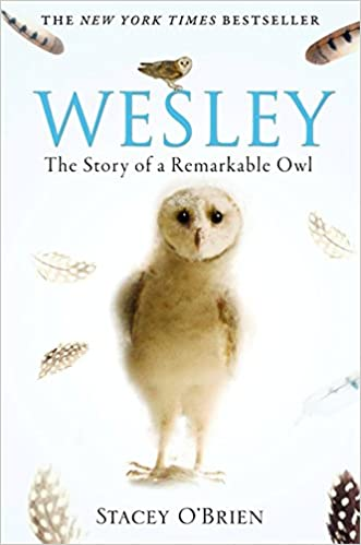 Wesley: The Story of a Remarkable Owl - Stacey O'Brien